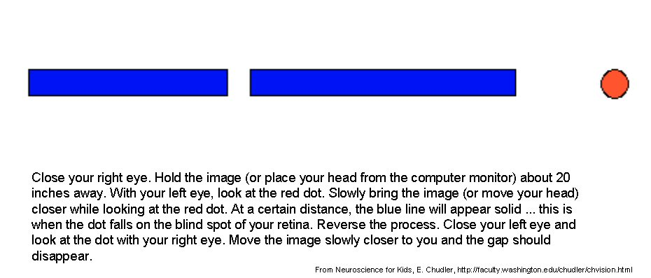 Rare image within blind spot test printable
